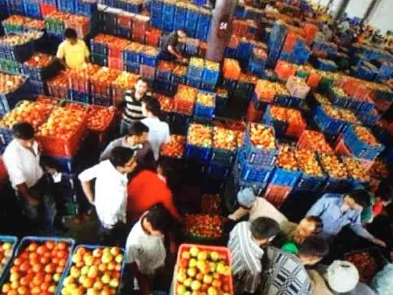 Shadab fruits wholesaler, Fatehabad Road - Coconut