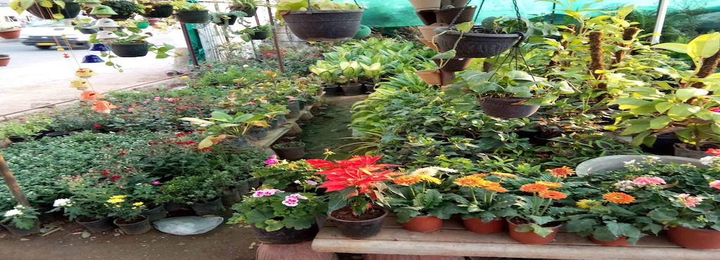 Indian Nursery Cement Pots And Flower Plants