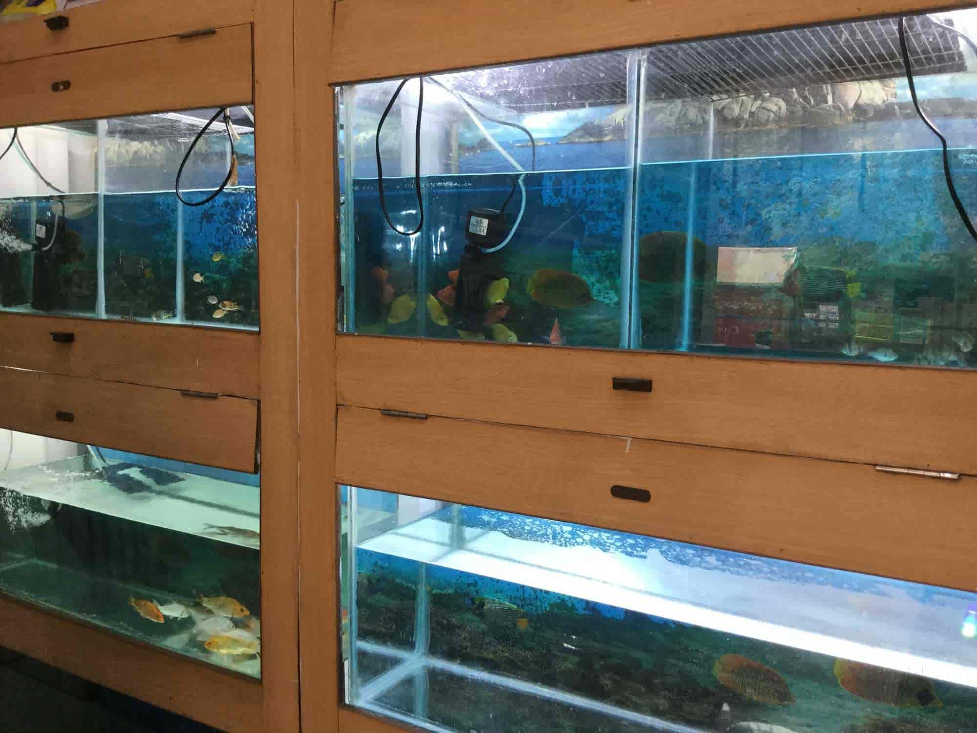 RAJA Aquarium Sahid Nagar Pet Shops in Bhubaneshwar Justdial
