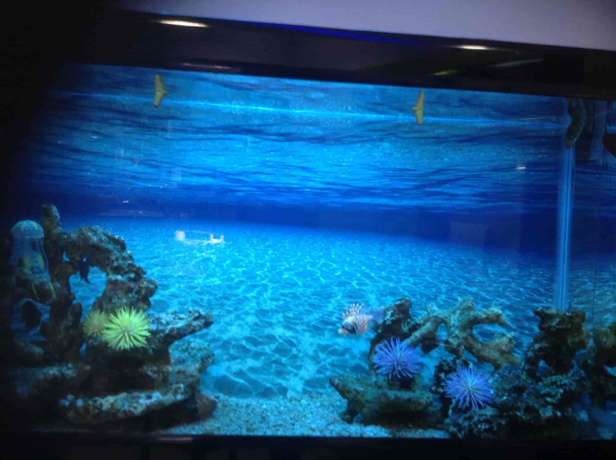 Aquarium Design India Mount Road Aquariums in Chennai Justdial
