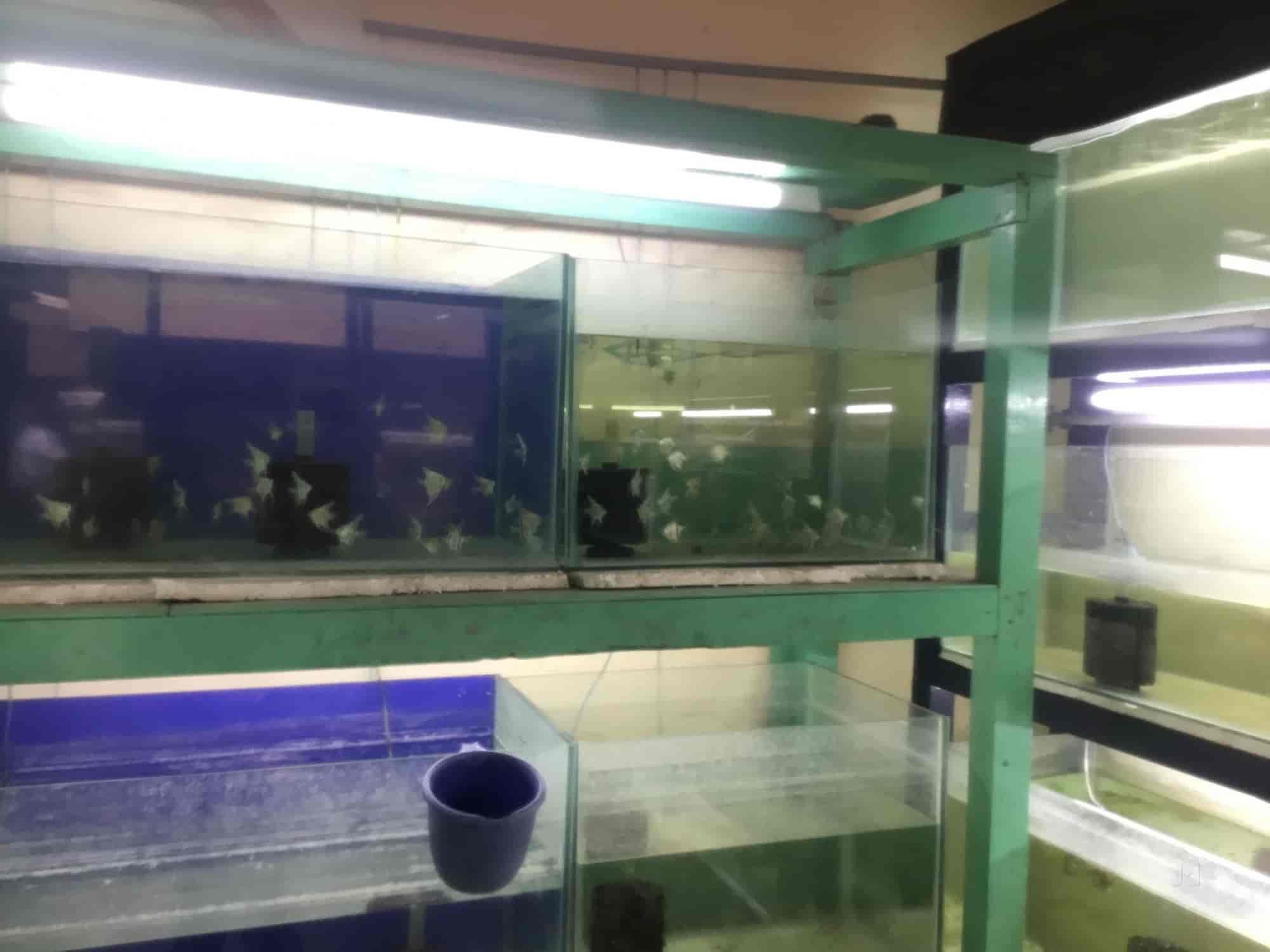 Balaji Aqua Farm Kolathur Balajee Aqua Farm Aquarium Fish