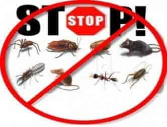New Goa Pest Control Services Mapusa Goa Pest Control Services - Cockroach map us
