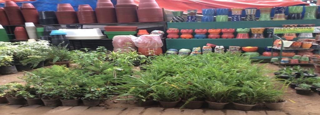 India Evergreen Nursery