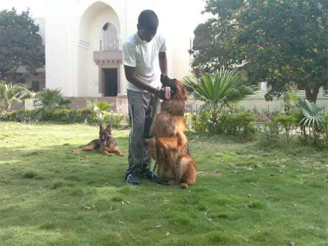Sixth Sense Dog Training in Padmarao Nagar, Hyderabad - Justdial