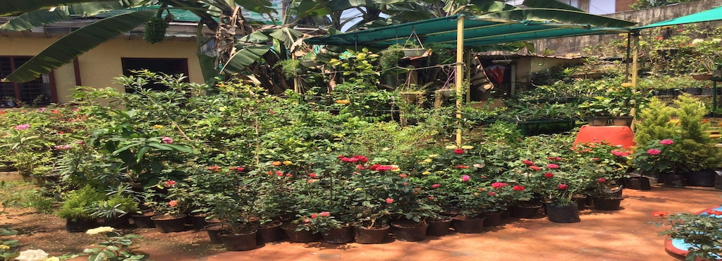 Nandanam Nagarasabha Garden And Nursery